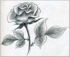 Sketsa bunga mawar simple dan Mudah