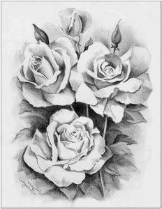 Sketsa bunga mawar tanpa tangkai