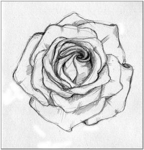 Contoh Sketsa gambar bunga mawar sederhana