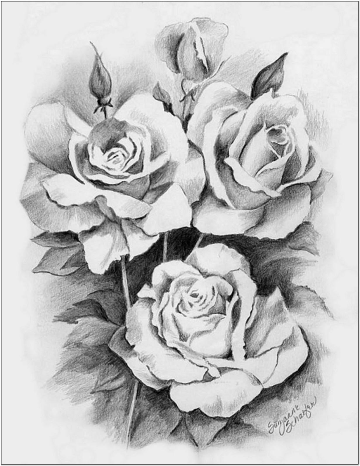 Sketsa Bunga Mawar Koleksi Contoh Sketsa Lukisan Bunga Mawar Terbaik Untuk Desain
