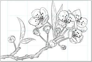 Contoh Sketsa Bunga Sakura Dengan Pensil