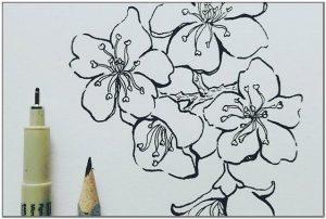 Sketsa Bunga Sakura Hitam Putih