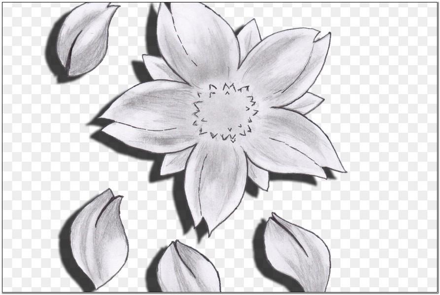 Contoh Sketsa Bunga Sakura Dengan Pensil Yang Mudah Dan Sederhana